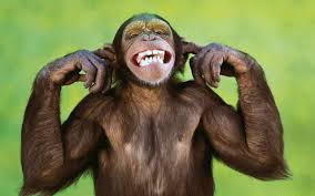 Monyet dan kitaran saham